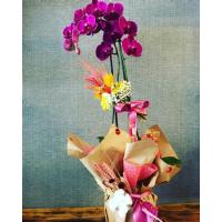Mor Orkide 2'li