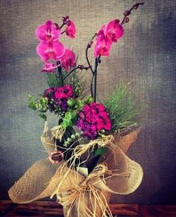 Pembe Orkide 2'li