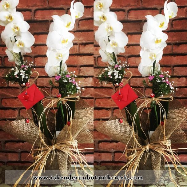 Beyaz Orkide 2´li