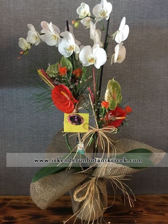 Beyaz Orkide 2'li